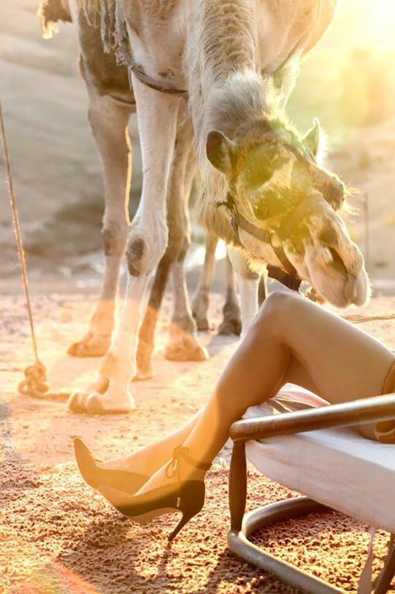 Kamelen 5